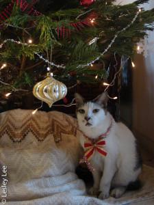Teddy Christmas bow.