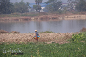 watering the fields, Yangon