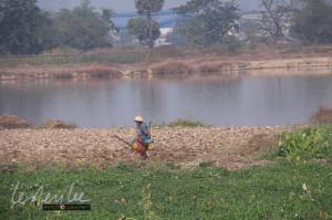 watering the fields, Yangon